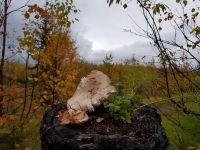 У норильских сантехников начался грибной сезон